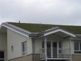 green-roof-in-witham-medium