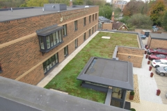 Green roof 15 month established in November