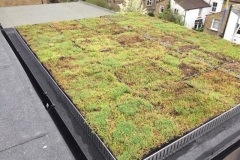 Green roof single storey extension