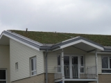 green-roof-in-witham