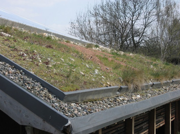 Biodiverse roofs