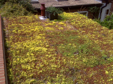 Extensive Green Roof Systems Wallbarn