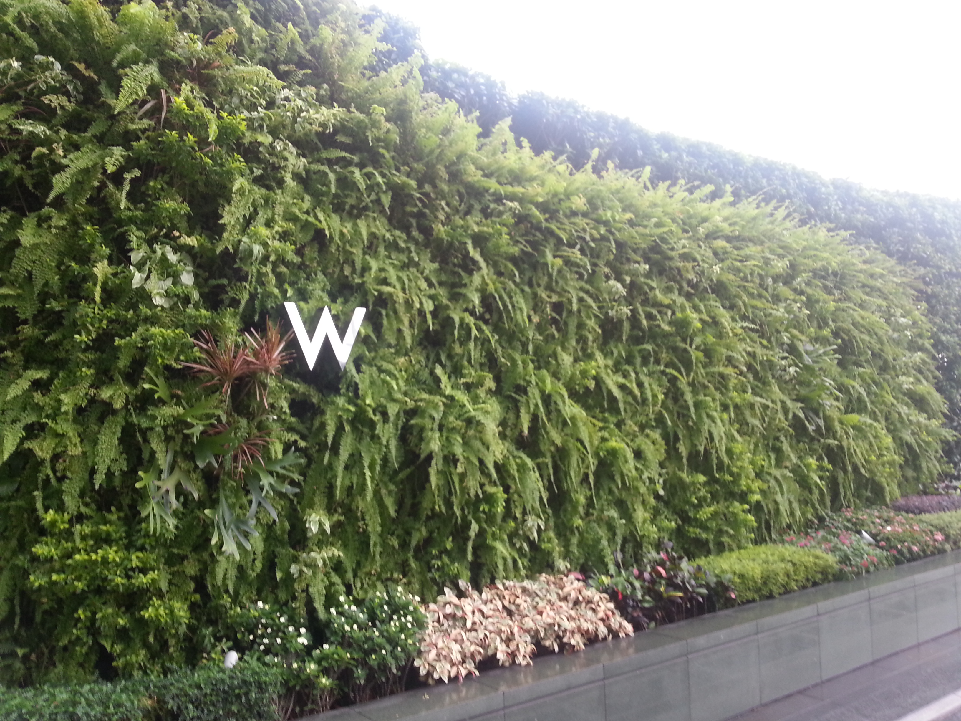 Great Example Of Living Wall At The W Hotel In Hong Kong