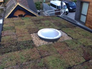 Sedum Green Roof System