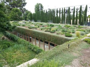 A Fully Installed Green Roof