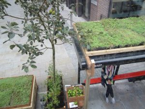 Green Roof Systems – Information and Benefits