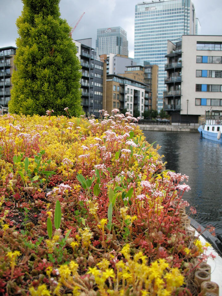 Canal barge green roof view of green roof and buildings in canal