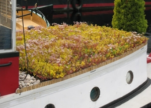 Canal barge retro-fit - sedum green roof