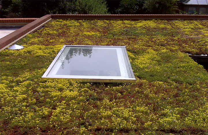 View of green roof installed at Kew Green