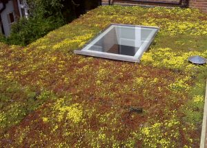 Kew Green, London - Sedum Green Roof