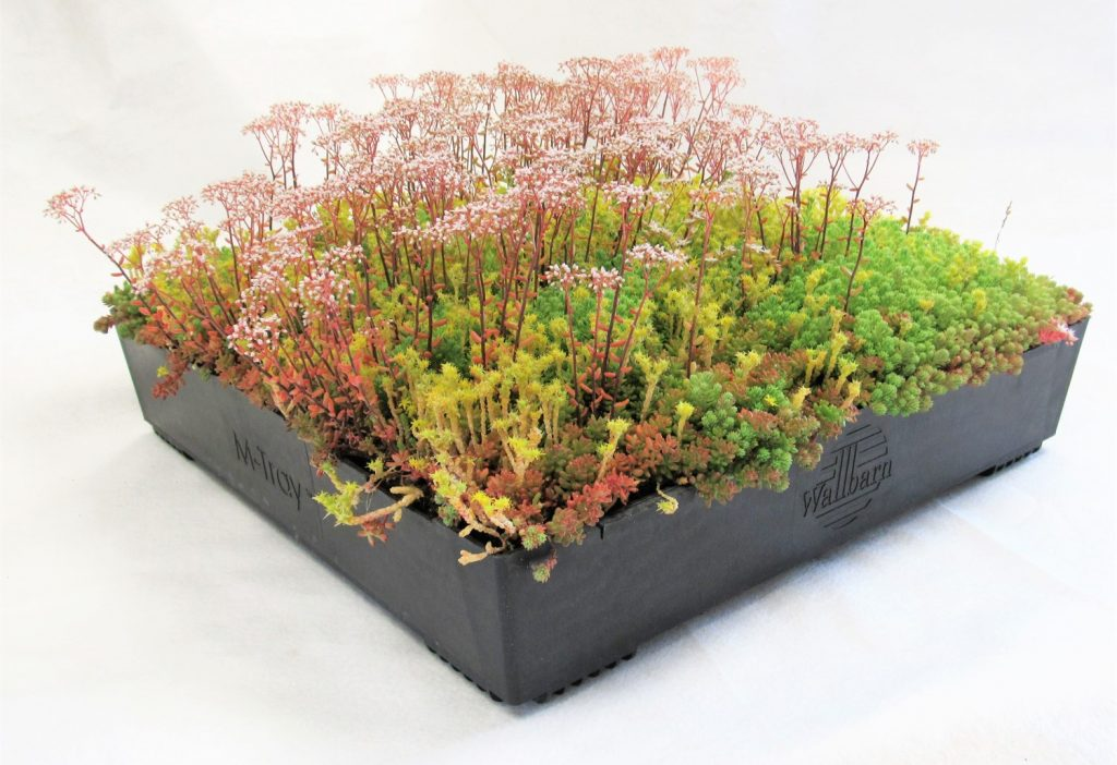 M Tray 174 Modular Green Roofs Wallbarn