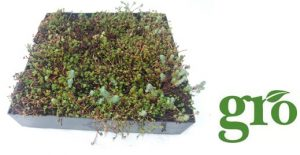 How Are Green Roofing Systems Constructed