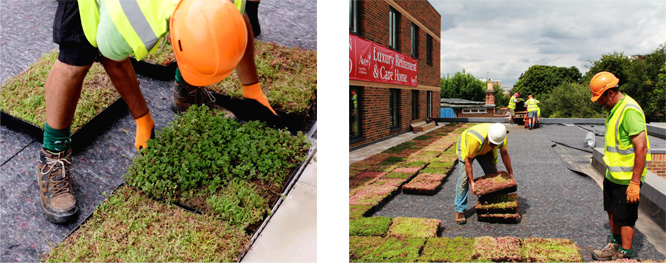New For Spring 2016 M Tray 174 Modular Green Roofs Wallbarn