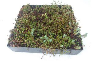 What Are The Benefits of Installing a Modular Green Roof?