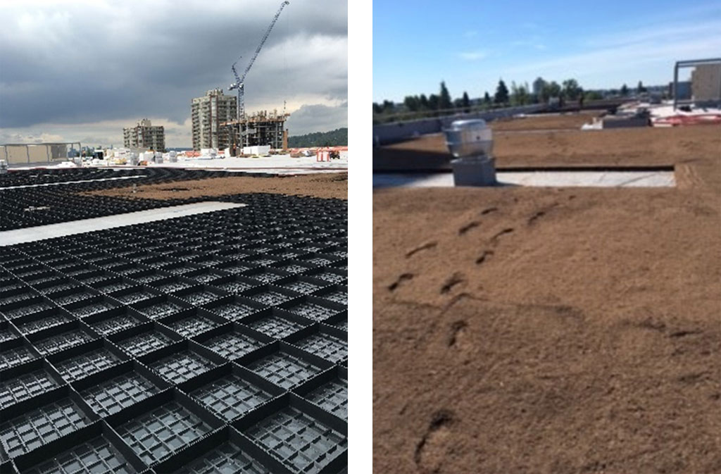 Safeway Towers, Vancouver - Green Roof Installation