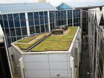 Re-greening Raisson Blu at Heathrow