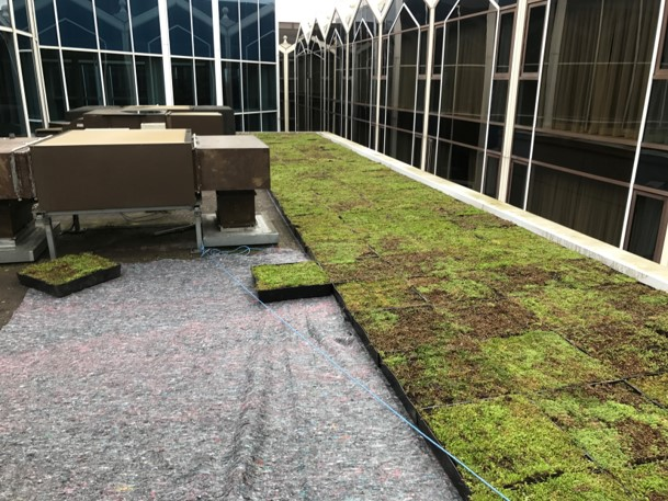An image of a green roof installation at the Radisson Blu Hotel, Heathrow