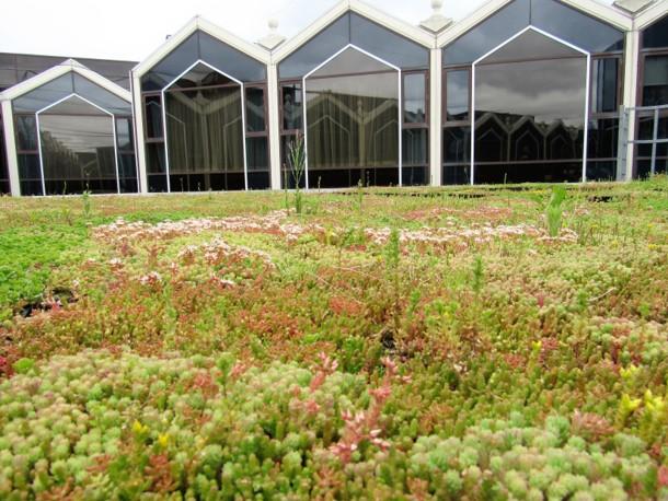 Radisson Blu Hotel, Heathrow green roof