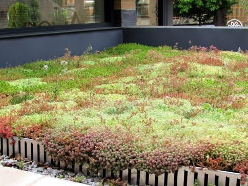 Easy Green Roof Installation