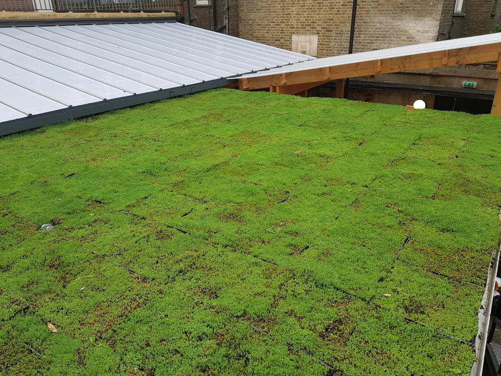 A large image of a newly installed green roof