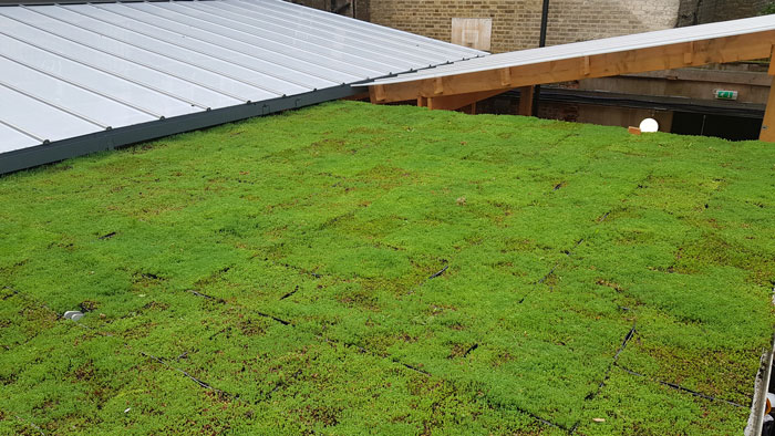 A large image of a newly installed green roof in Knightsbridge, London