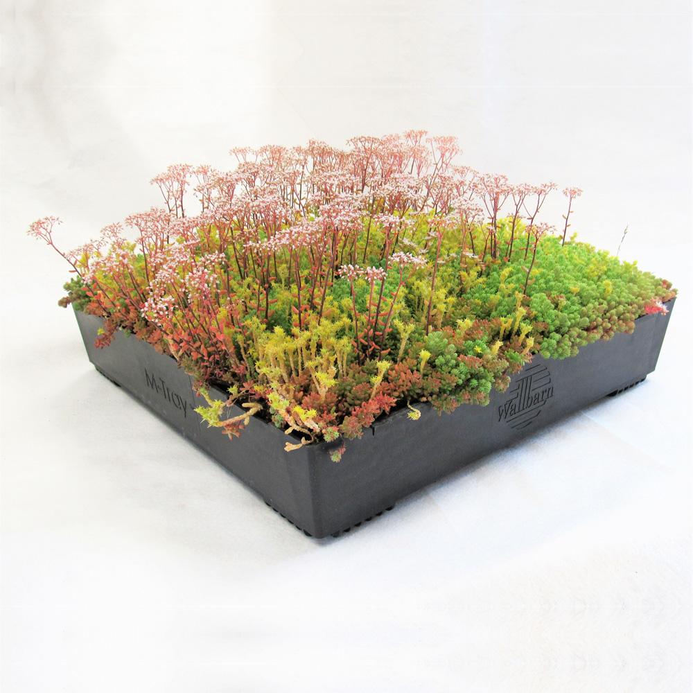 Garden Storage M Tray® (New)