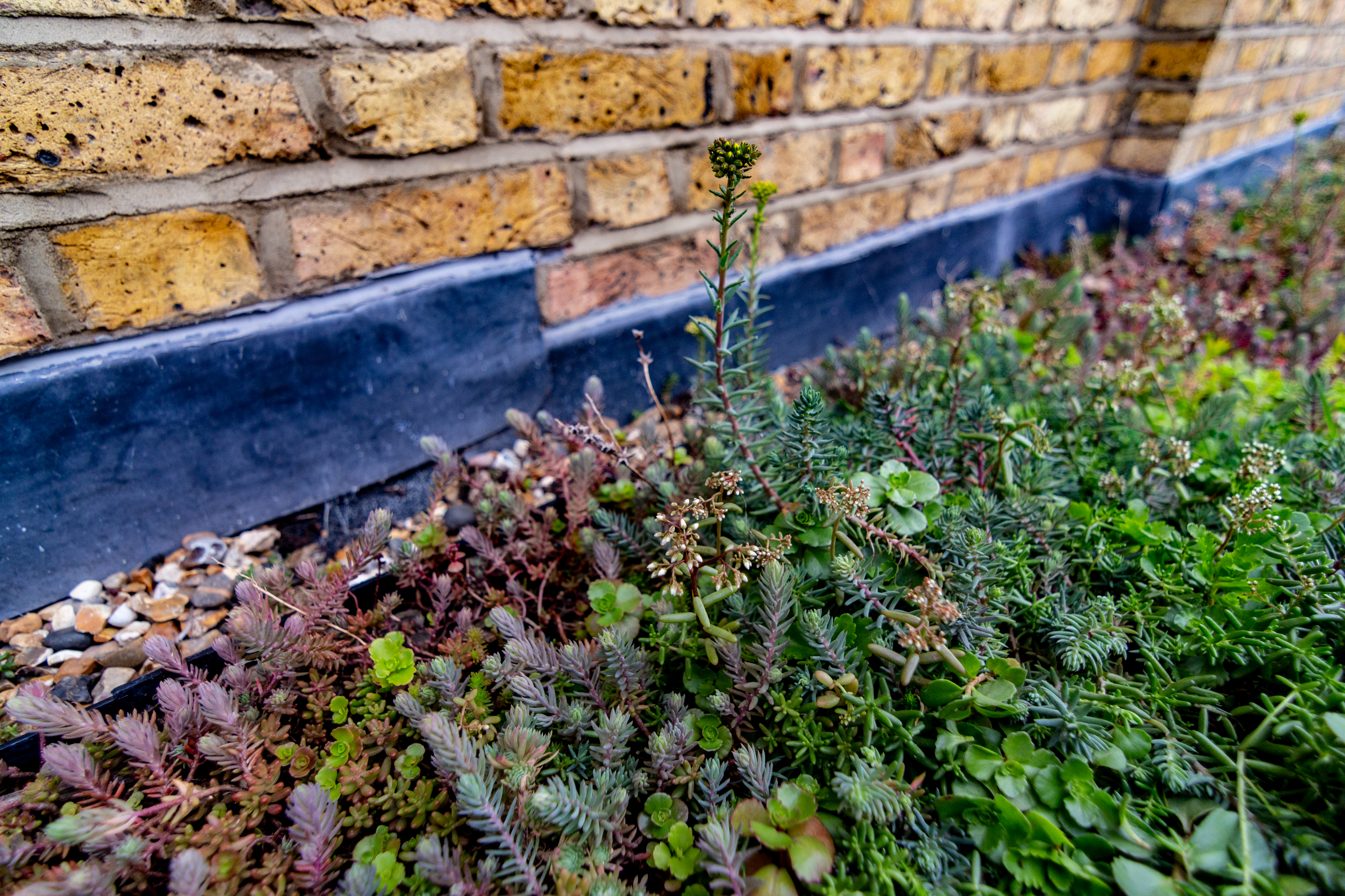 A close up image of a green roof installation