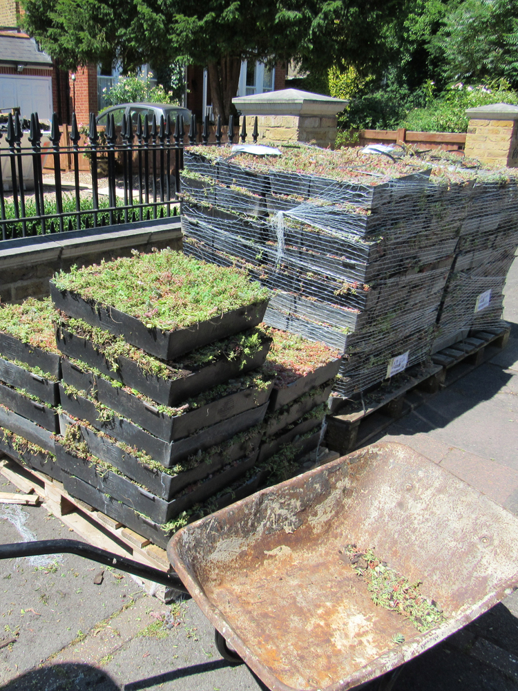 An image of a M-Tray green roof installation in Sydenham in progress