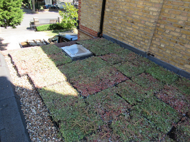 An image of a completed M-Tray green roof installation in Sydenham
