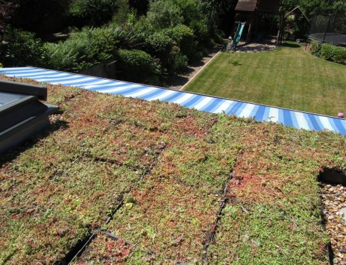 M-Tray®green roof, Sydenham