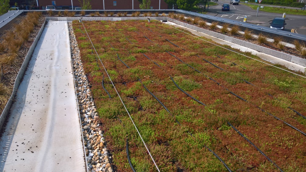 An image of the completed M-Tray green roof installation at Starbucks in Hammersmith