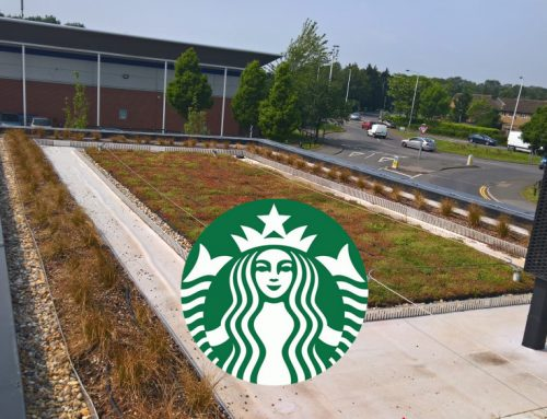 M-Tray® green roof completes new Starbucks