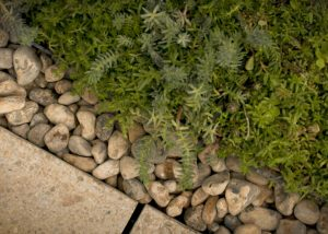 A close-up of completed M-Tray green roof installation