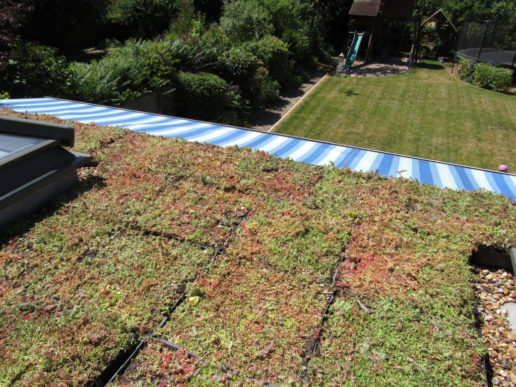 It's Springtime – Time For a Little Green Roof Maintenance