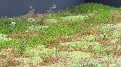 What are biodiverse green roofs?