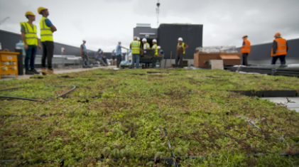 What are intensive green roofs?