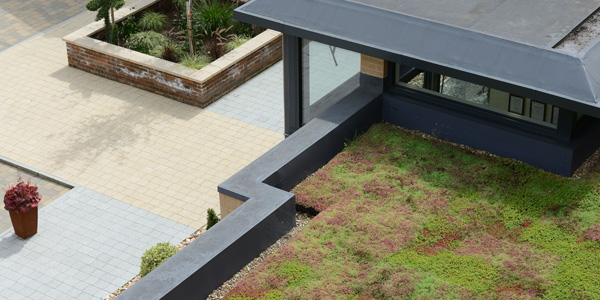 An image of a green roof