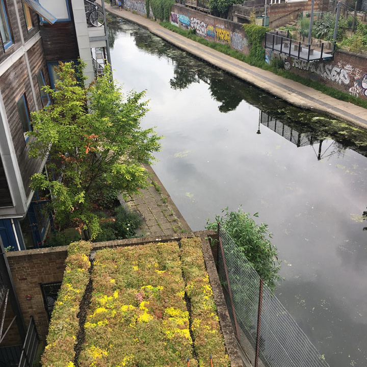 Green roof overlooking the canal at St Pancras Way