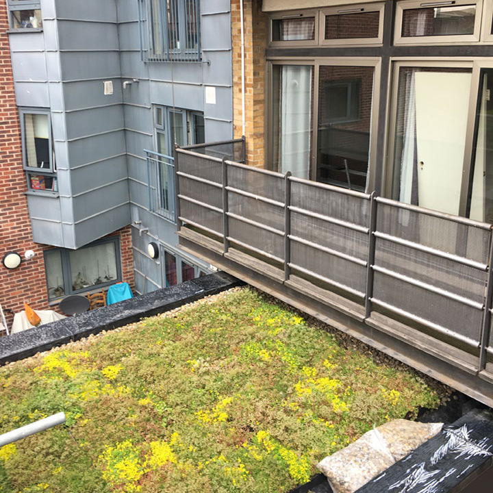 Finished green roof at St Pancras Way