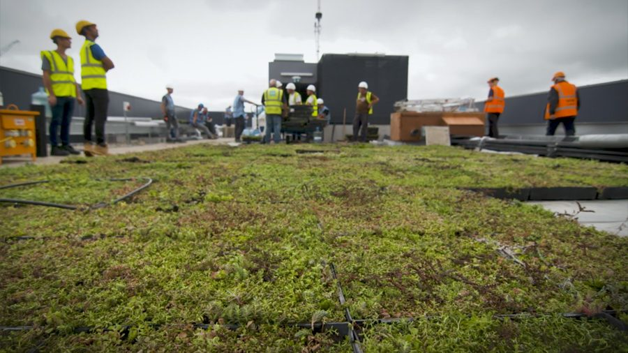 An image of a fully installed green roof