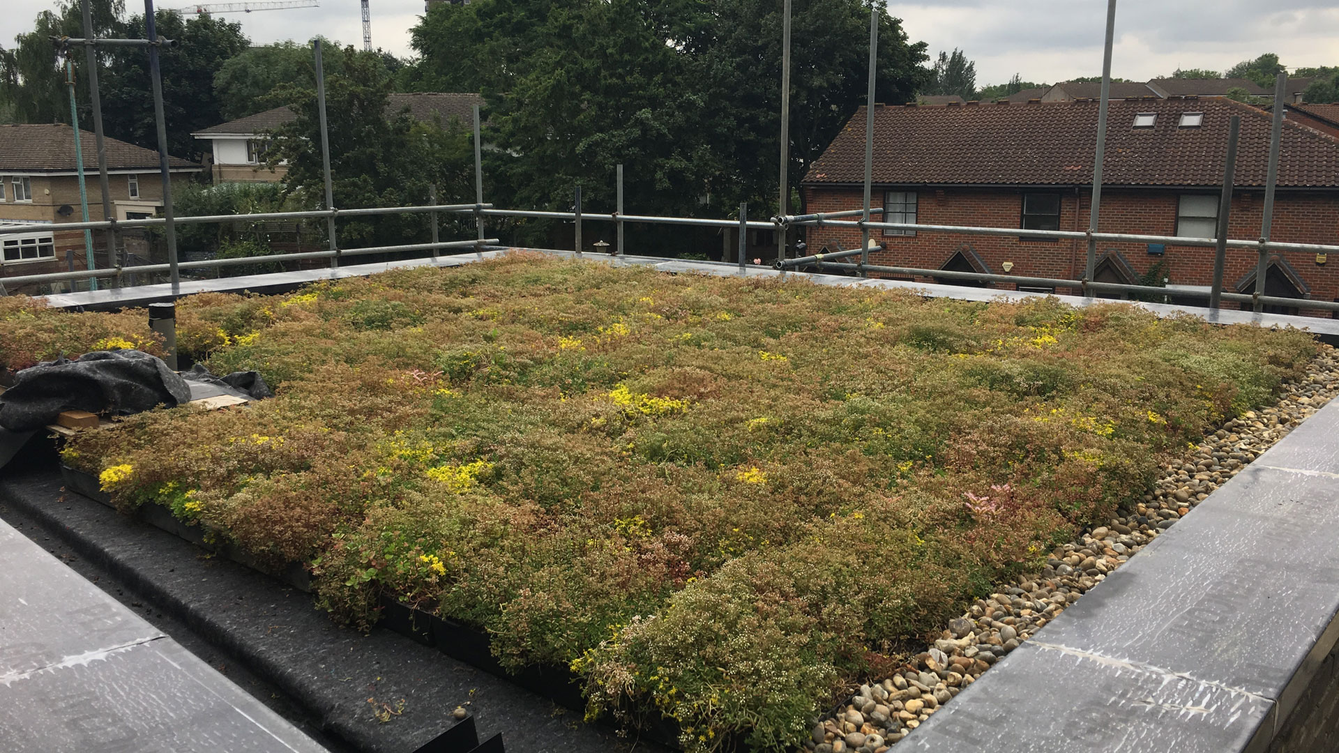 Green Roof Project, St Pancras Way, London – 2019