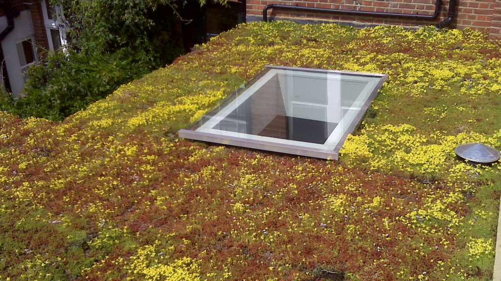 An image of a roll-out green roof