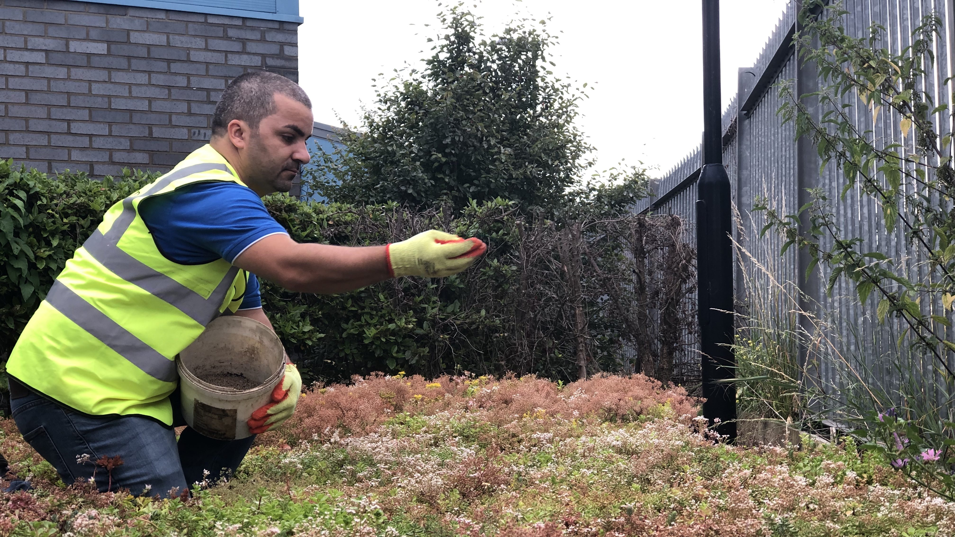 Maintenance Schedule for  Green Roof Systems