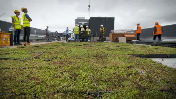 A close-up of completed M-Tray green roof installation in Hammersmith