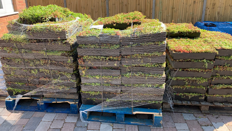 M-Tray green roof on pallets