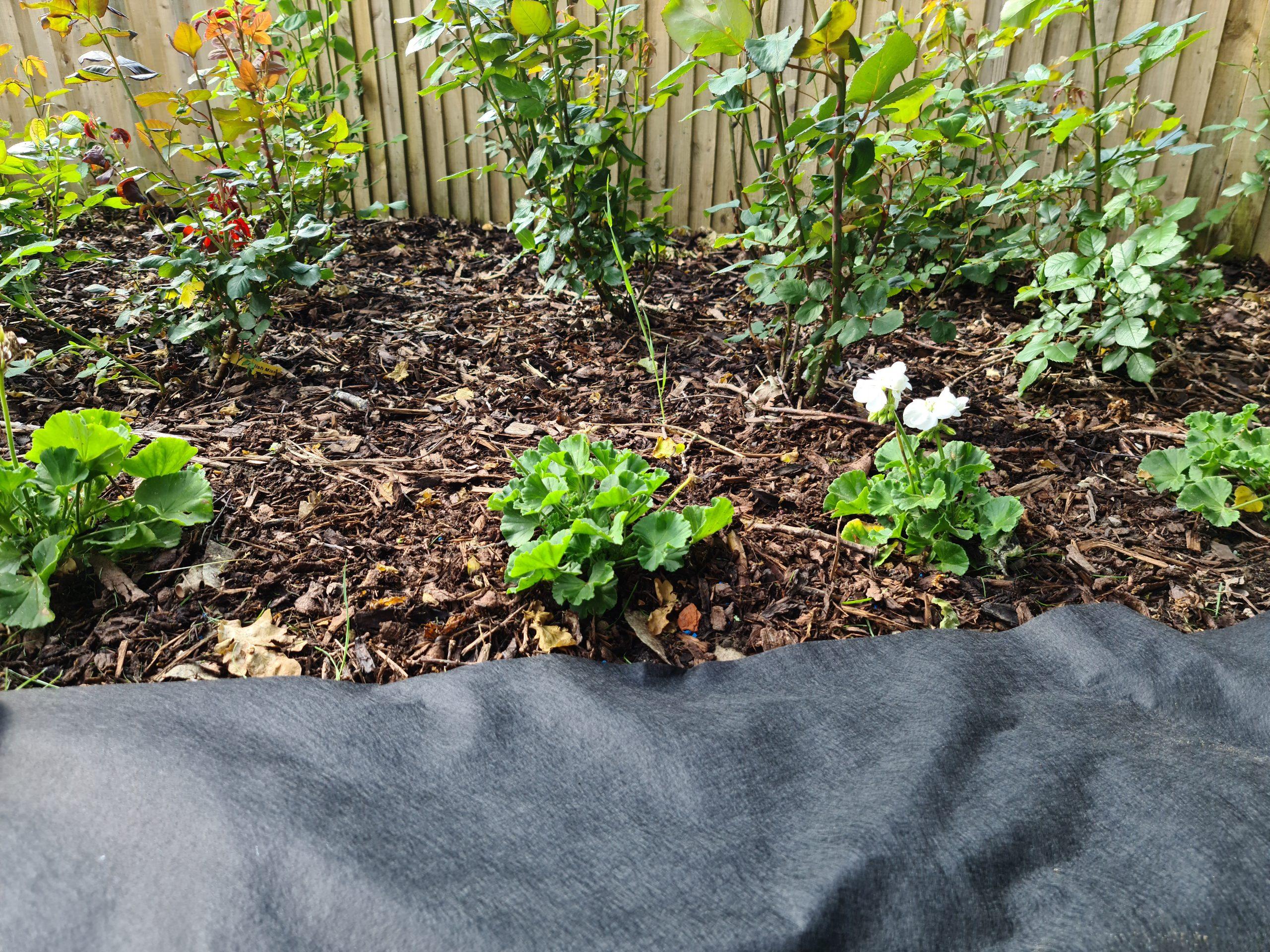 rose bed weed liner